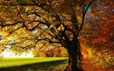 Witterung schlechter: Verkehrsrisiko Herbst