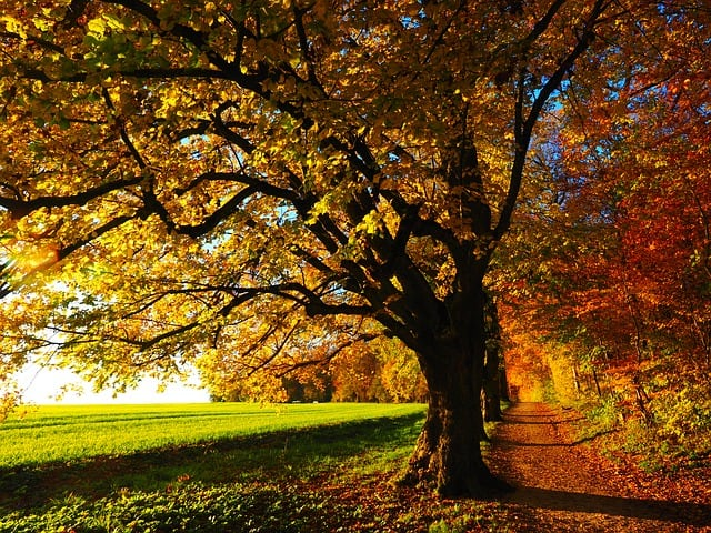 Verkehrsrisiko Herbst: Witterung schlechter